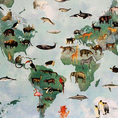 coton-maps-animals-monde-animaux